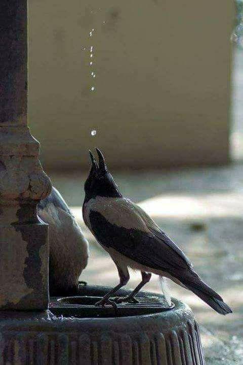 நீரின்றி அமையாது உலகம்…!கவிதை கவித்தென்றல் ஏரூர்